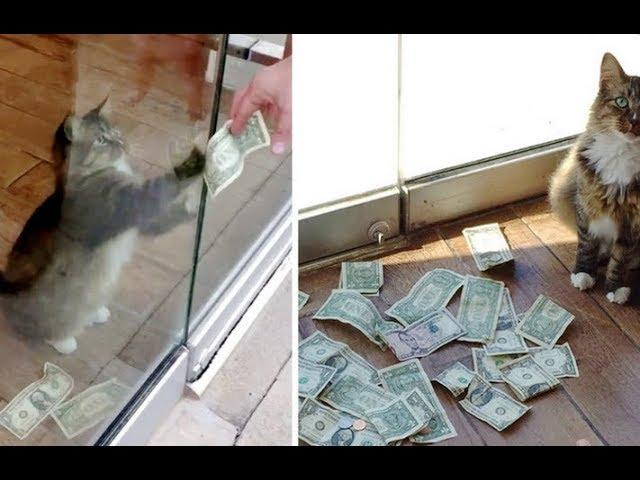 Kitty Surprises His Humans When They Find Out He's Been Snatching Money