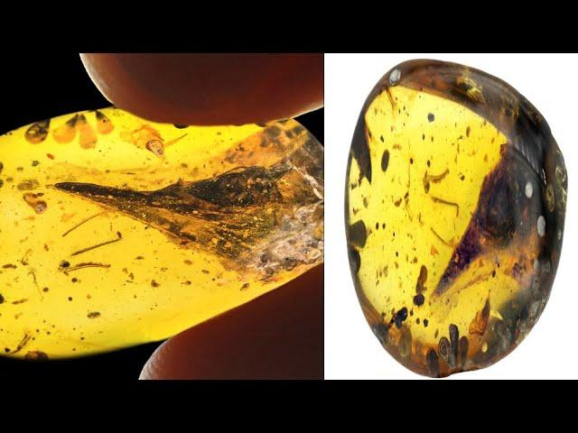 Smallest Dinosaur Ever Discovered Found Perfectly Trapped in Amber 2020