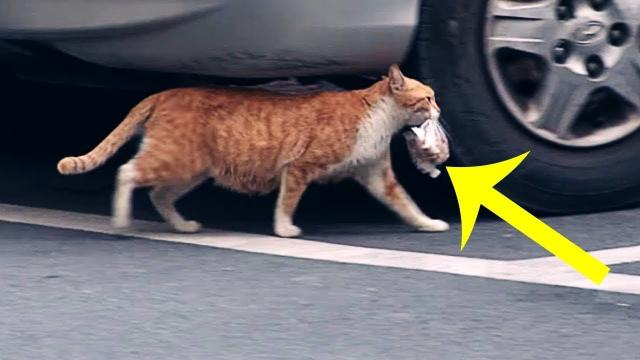 This Fussy Cat Refused Food That Wasn't Bagged Up. Then A Woman Followed Her And Solved The Mystery