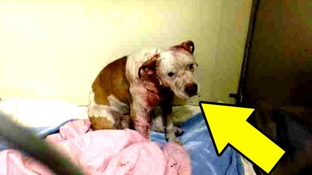 Rescued Dog Who Was About To Be Put Down Hugs Vet Tech, Then His Life Takes A U-Turn
