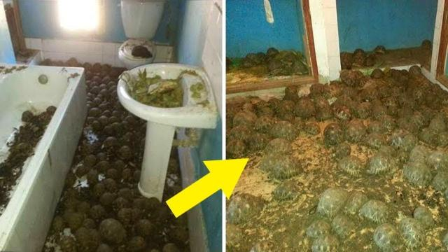 Cops Called to Investigate Smell from Abandoned House Didn't Expect to Find This