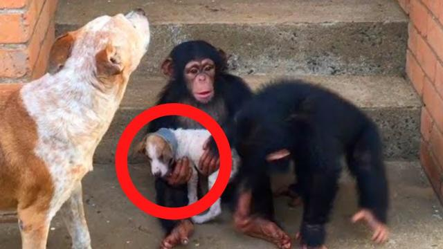 This Puppy Gets A Second Chance At Life At A Chimp Sanctuary