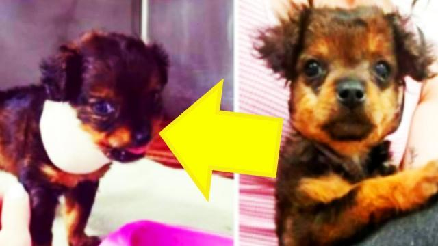 Vet Who Refuses To Put Down Paralyzed Puppy Gets A Huge Surprise A Few Hours Later