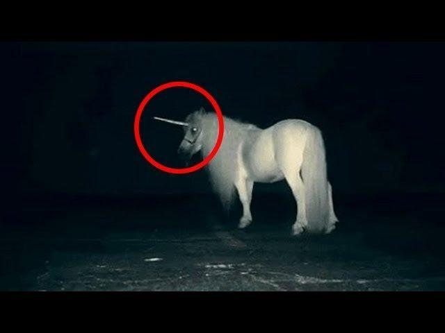 Scientists Have Found Fossils That Prove Unicorns Existed – But They Were Actually Pretty Terrifying