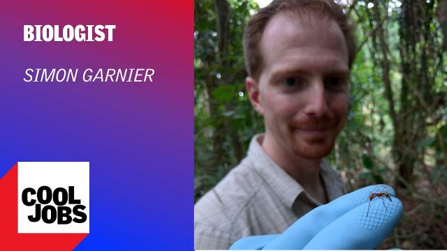 Cool Jobs: Swarm Searcher
