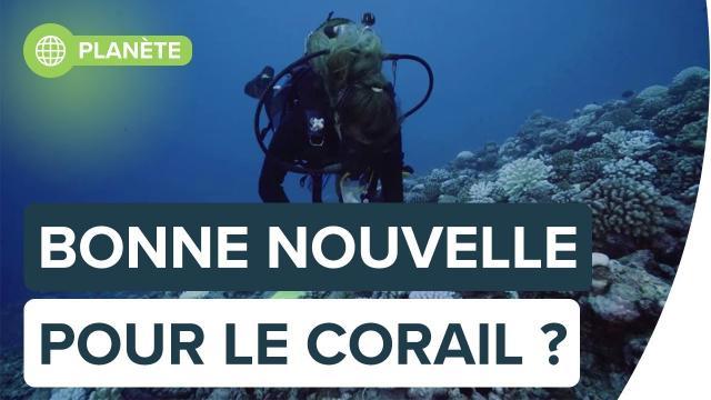 Grande barrière de corail : la vie sous-marine prospère malgré le réchauffement | Futura