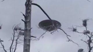 Real UFO Figure Captured From Russia !! UFO Footage Compilation