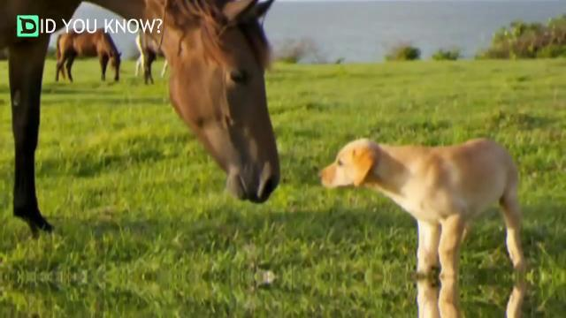 Horse Becomes Best Friends With A Tiny Pit Bull And It's Just The Cutest Thing   YouTube
