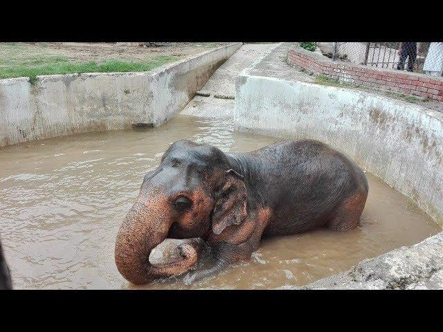 This Elephant Spent 30 Years Alone In The Zoo  Where He's Going Now Tears