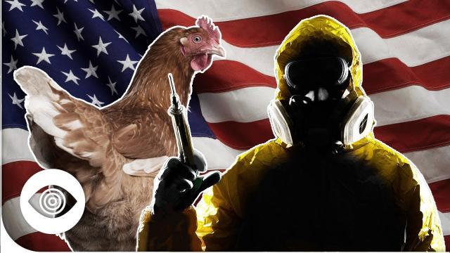 Did The USA Create Bird Flu?