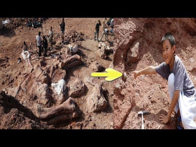 Chinese Boy  Discovers 66 Million Year Old Dinosaur Eggs While Playing