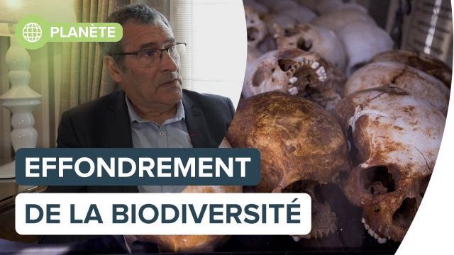 Effondrement de la biodiversité : l'humanité y survivra-t-elle ? | Futura