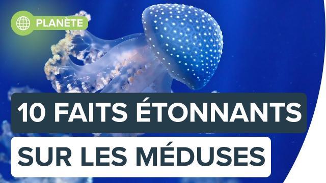10 choses étonnantes sur les méduses | Futura