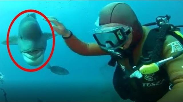When This Diver Strikes A Sunken Shrine, A Truly Bizarre Friend Appears Out Of The Blue..