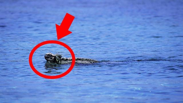 Miles From Shore, This Kayaker Couldn't Believe What He Spotted Bobbing In The Water