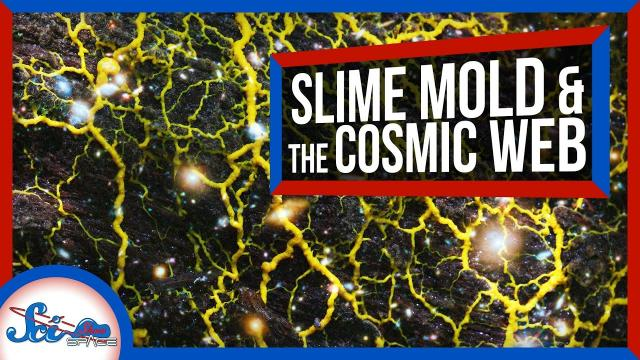 How Slime Mold Is Tackling Mysteries of Cosmology | SciShow News