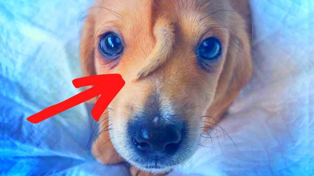 The Story Behind The Dog Born With An Extra Little Tail On His Face is Astonishing