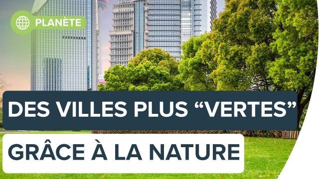 Réduire l'impact environnemental des villes grâce à la nature | Futura