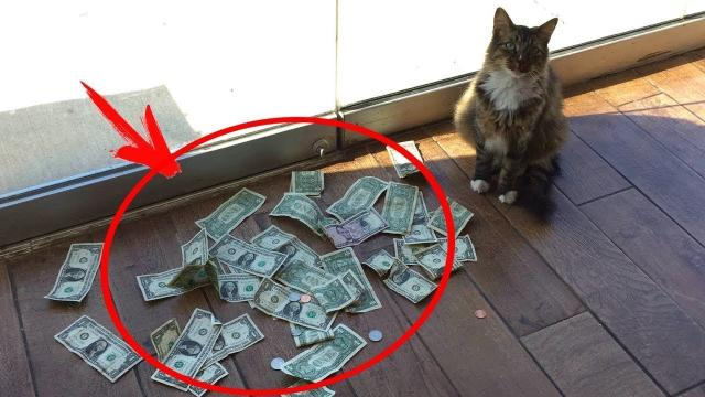 This Cat Brought His Owner a Bag of Money Every Day , So He installed a Camera and Was Surprised !