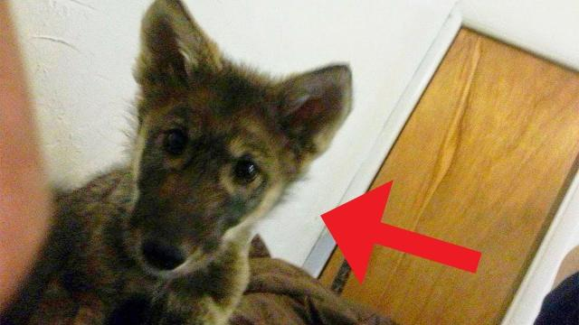 This Man Adopts A Stray Puppy , But Later Realized It Was Something Else