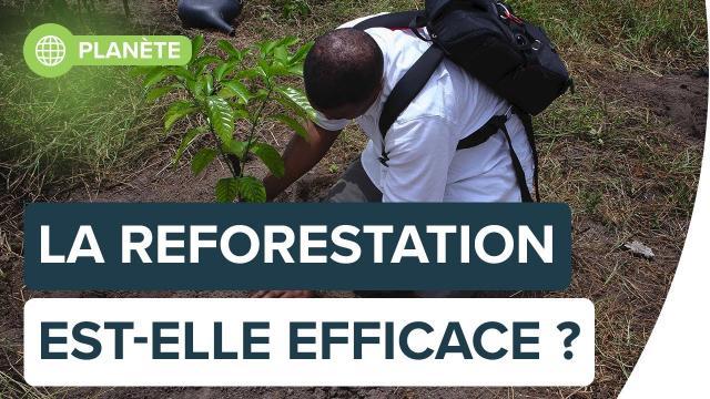 Contre le réchauffement, la reforestation est-elle une solution efficace ? | Futura