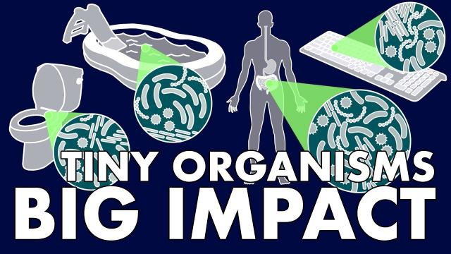 Tiny Organisms, Big Impact