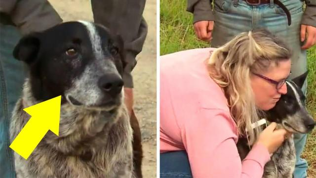 This Elderly Dog Proved His Worth When He Helped Search for a Little Girl