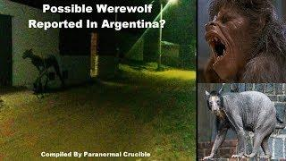 7ft Beast Leaves Residents Terrified In Argentina