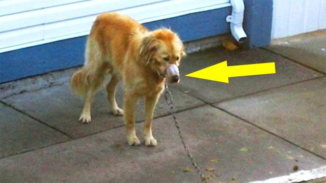 Neighbors See Dog A With His Mouth Taped Shut, So They Break Into The Man's Yard
