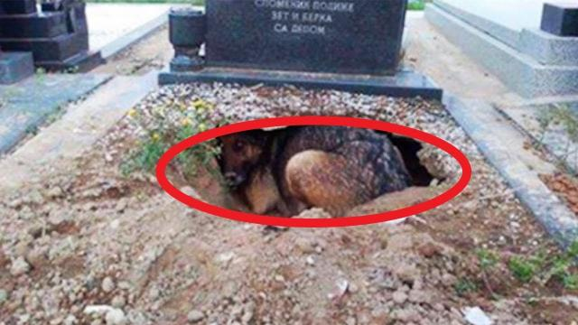 They Thought This Dog Was Grieving For Her Owner Until They Noticed What Was Underneath