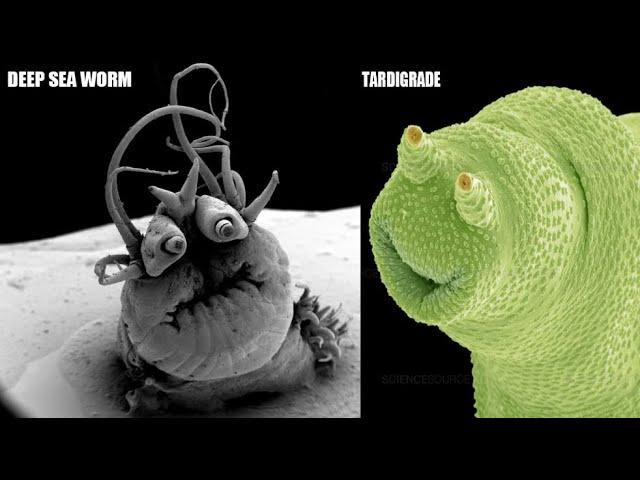 Terrifyingly Funny Creatures Under a Microscope