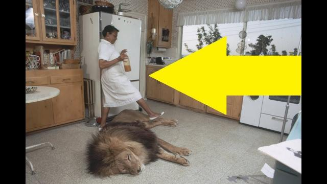 Woman Spots A Wild Animal In Her Home And Proceeds To Make The Biggest Mistake Imaginable