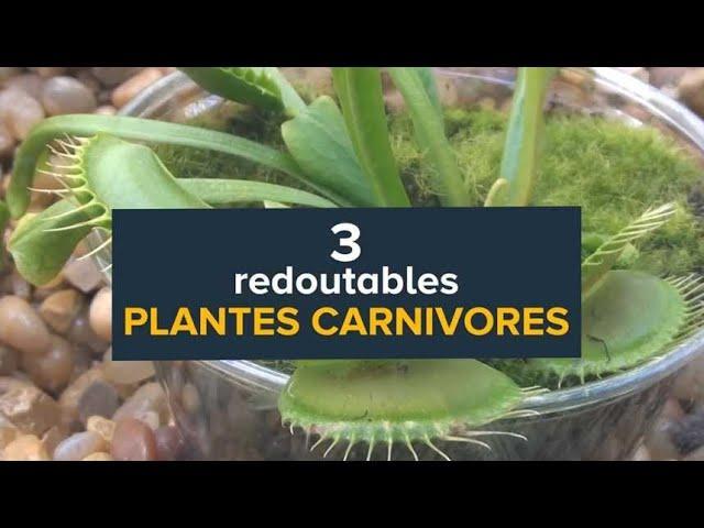 Plantes carnivores : Dionée, Droséa et Népenthès en action
