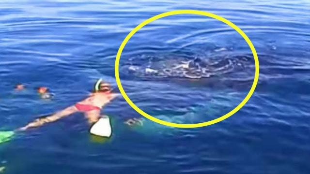 "Family Saves Humpback Whale From Nearly Drowning Gets ""Thank You"" They'll Never Forget"