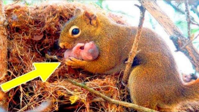 A Squirrel Urged a Man to Help Her, You Won't Believe What He Found !