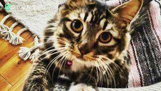 They Spotted This Kitten Walking Weirdly  Then An X ray Revealed Her Unusual Condition