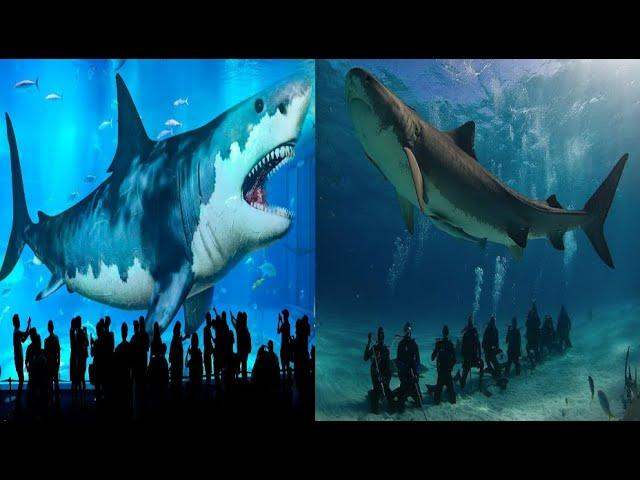 Researchers discover new 91 million year old giant shark