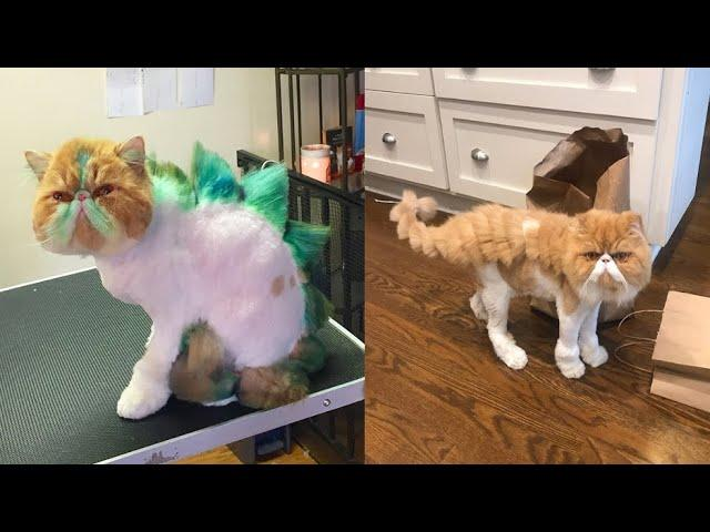 People are doing this to their cats now