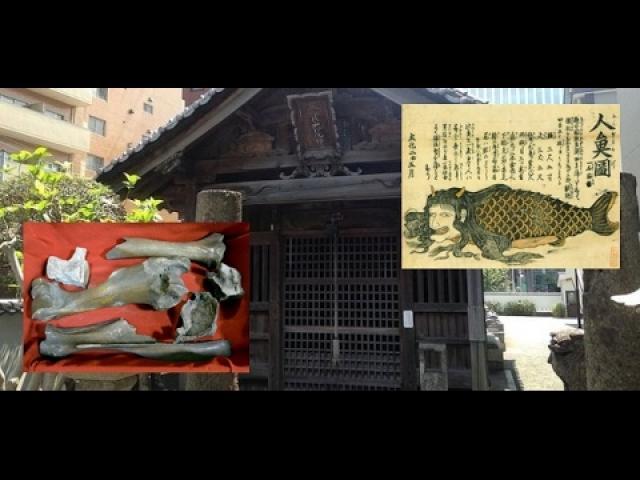 'Mermaid bones' on show at Japanese temple