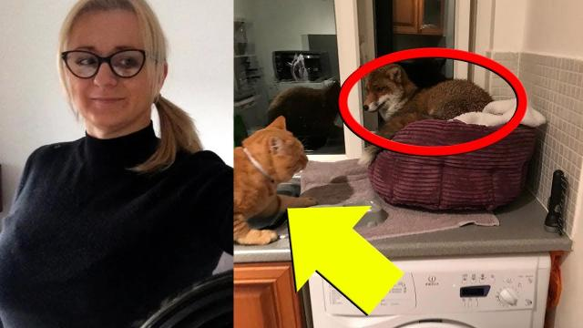 Woman Who Finds An Uninvited Guest In Her Kitchen Is Taken Aback By Her Cat's Reaction