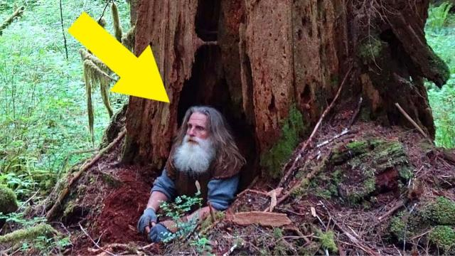 How The Last True Hermit Survived Almost 30 Years Living In The Woods