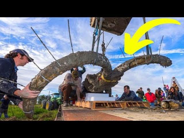Farmer Digs Up Woolly Mammoth Bones In His Soy Field