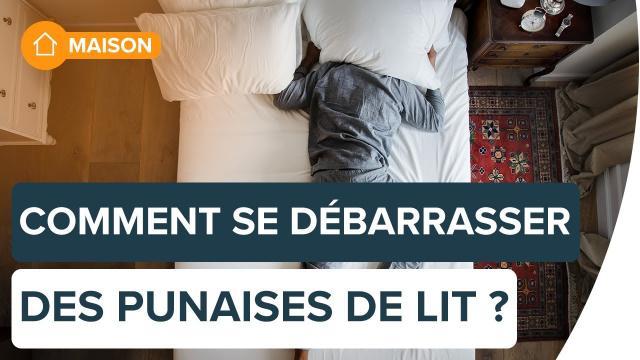 Comment se débarrasser des punaises de lit ?   Futura