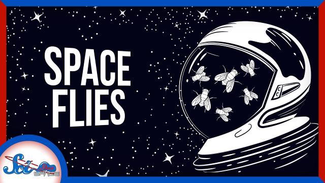 The Surprising Benefits of Space Flies