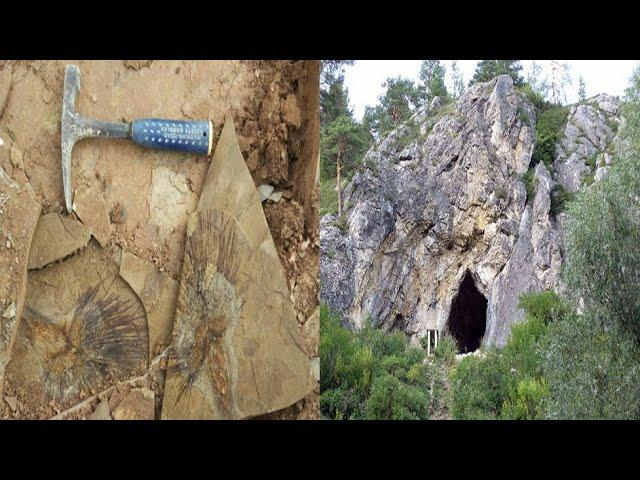 Six million year old skeleton points to arid past of Tibetan plateau