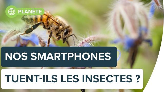 Nos smartphones tuent-ils les insectes ?   Futura