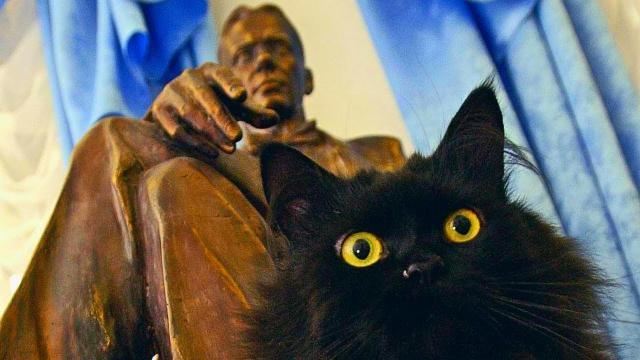 This Cat Roams Around College Campus To Serve One Adorable Purpose