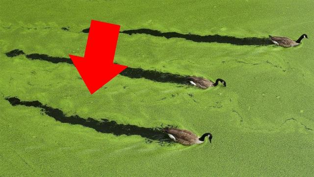 When Tourists Saw This Green Substance On The Beach, Experts Warned Them To Keep Their Distance