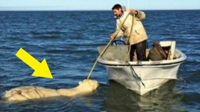 They See A Polar Bear Struggling In The Water  When They Realize Why — Watch What They Do!