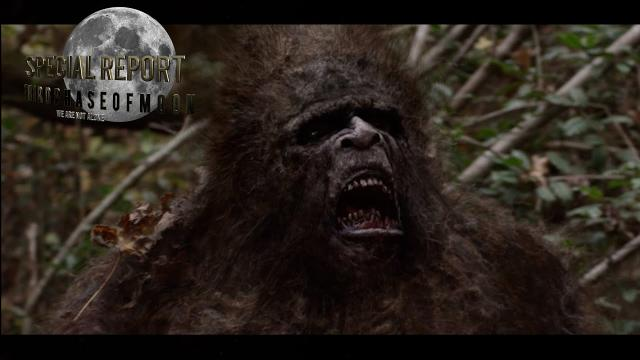 Could This Video Be the Clearest Evidence Of Bigfoot Yet? BUCKLE-UP!
